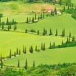 Stock Photo: Cypress curve 35