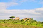 Tuscany vineyard 01 — Stock Photo