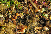 Compost pile 14 — Stock Photo
