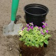 Stock Photo: Shrub planting 18