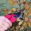 Stock Photo: Shrub cutting 04