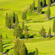 Stock Photo: Cypress curve 30