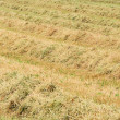 Hay 01 — Stock Photo #12139970