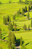 Cypress curve 30 — Stock Photo