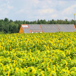 Sunflower field and solar plant 02 — Stock Photo