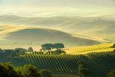 Tuscany hills 38 — Stock Photo