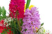 Hyacinth 02 — Stockfoto