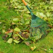 Stock Photo: Leaves rake 11
