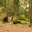 Stock Photo: Sandstone rock in forest 27
