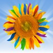 Stock Photo: Sunflower with multicolored petals