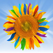 Sunflower with multicolored petals — Stock Photo