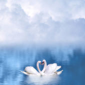 Graceful swans in love — Stock Photo