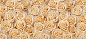 Creamy roses bouquet seamless pattern — Stock Photo