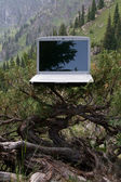 Laptop on a tree — Stock Photo