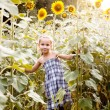 Little girl on a field of sunflowers — Stock Photo