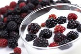 Yogurt with fresh blackberry fruit — Stock Photo