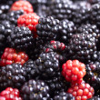 Fresh blackberry background - Stock Photo