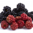 Blackberry and redberry - Stock Photo