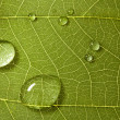 Leaf with drops - Stock Photo