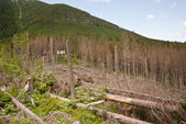 Mountain landscape with felled trees — Stock Photo