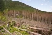 Berglandschap met gekapte bomen — Stockfoto