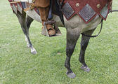 Medieval horse — Stock Photo