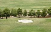 Ağaçları ile golf sahası — Stok fotoğraf