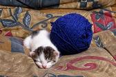 Yorgun yavru kedi — Stok fotoğraf