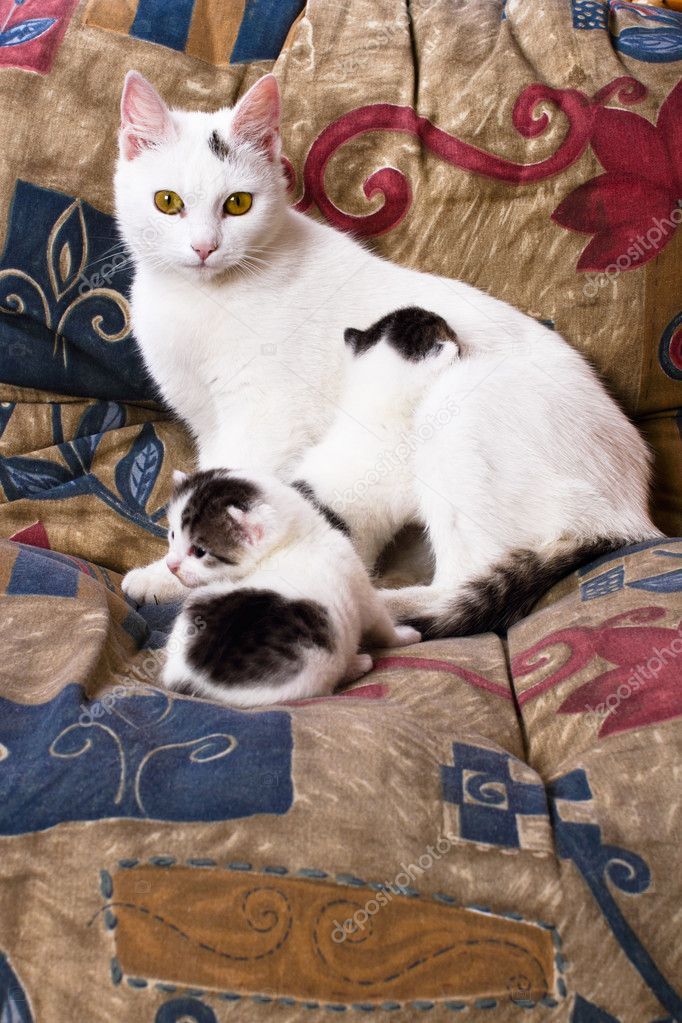 Vigilant in guarding their kittens cat on a pillow in a chair — Stock Photo #10930277
