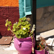 Flower Pots on Samos — Stock Photo #11026961