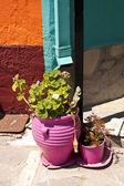 Flower Pots on Samos — Stock Photo