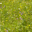 Flowering Meadow - Photo