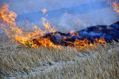 Fire on the retracted the field — Stock Photo