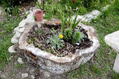 切り株から植木鉢 — ストック写真