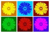 Color dandelion — Stock Photo