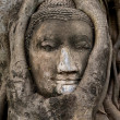 Buddha Face entangled in branches (Wat Mahathat - Ayutthaya) — Stock Photo