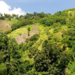 Hillside Farm Fields - Mindanao, Philippines — Stock Photo