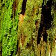 Stock Photo: Green Moss on Rotting Bark