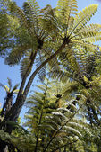 Lush Green Tropical foliage, Abel Tasman National Park, New Zeal — Stock Photo