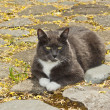 Dark cat sitting on rock pad — Stock Photo