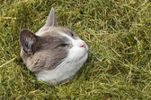 Cute Cat looking out of pile of grass — Stock Photo