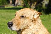 Cute dog sitting on grass — Stock Photo