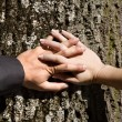 Hands of husband and wife on the tree - Stock Photo