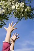 Hands of little girl and flowers - spring — Stock Photo