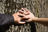 Hands of husband and wife on the tree — Stock Photo