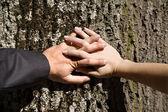 丈夫和妻子在树上的手 — 图库照片