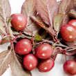 Wild red plums - Stock Photo