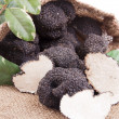 Freshly harvested black truffle — Stock Photo