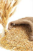 Bunch of ears of wheat — Stock Photo