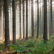 Stock Photo: Panorama landscape of forest in the mist with sun rays.